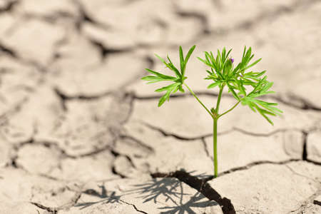 Smal plant growing from dried cracked soil. Foto de archivo