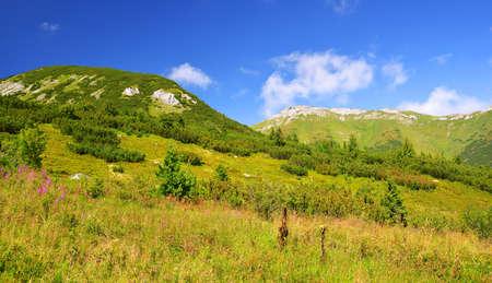 Summer mountain landscape in Belianske Tatry. Tatra National Park, Slovakia. Zdjęcie Seryjne