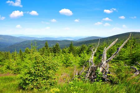 Summer landscape in National Park Sumava. View from the Pancir mountain. Czech republic. Zdjęcie Seryjne