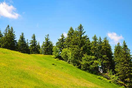 Meadow on mount Grosser Arber, Bayerische Wald National Park, Germany. Spring landscape.