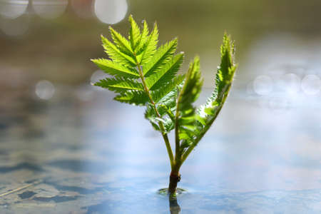 Young plant growing in puddle of water. Concept of new life. Stockfoto