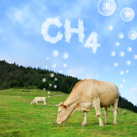 Cow grazing on pasture with CH4 text from clouds at the background. The concept of methane emissions from livestock. Stockfoto