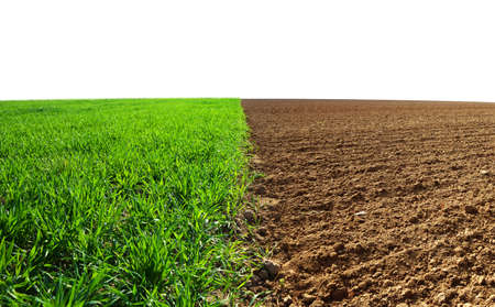 Green wheat and plowed field isolated on a white background. Agriculture theme. Stockfoto