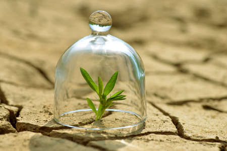 Growing plant in a glass on dry cracked earth.The concept of environmental protection or global warming.