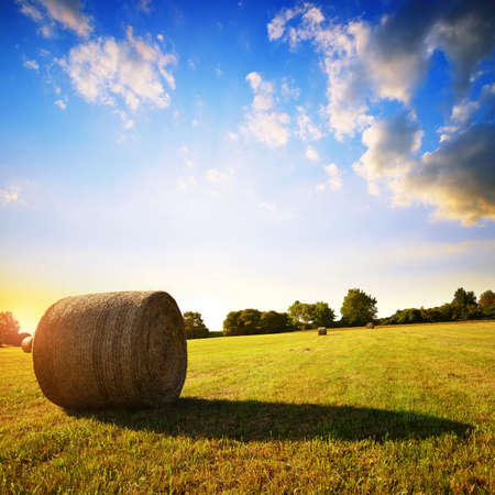 Straw bale on meadow at sunset. Summer rural landscape.