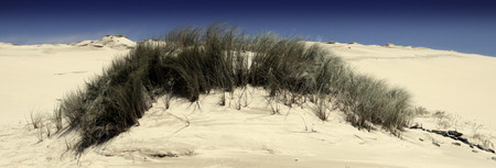 Beach sand dune near Port Alfred, South Africa.