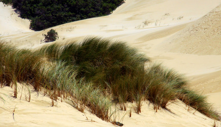 Beach sand dune near Port Alfred, South Africa.