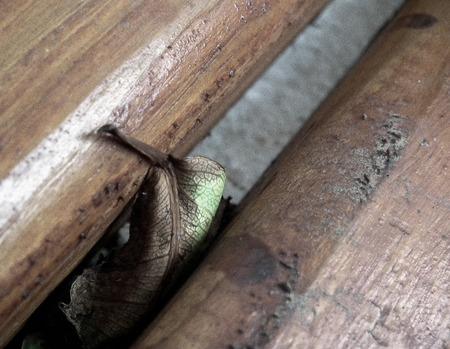 Dried leaf hidden between two wooden beams.