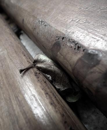 wooden beams: Dried leaf hidden between two wooden beams.