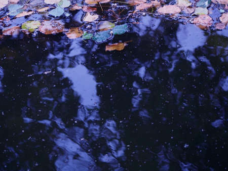 dark pool with water and infested colorful autumn leaves on the top, yellow, orange and green leaves of linden tree floating on the pond, gloomy autumn mood, wallpaper