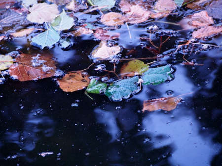 dark pool with water and infested colorful autumn leaves, yellow, orange and green leaves of linden tree floating on the pond, gloomy autumn mood, wallpaper