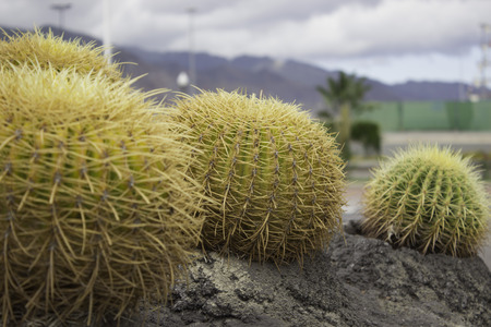 conformation: Cactus Stock Photo
