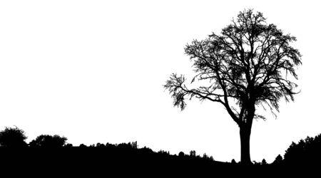 Sagoma di albero, cespuglio con rami. Alberi del paesaggio invernale e spazio nero per il testo, isolato