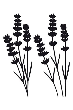 Bunch of lavender flowers Illustration