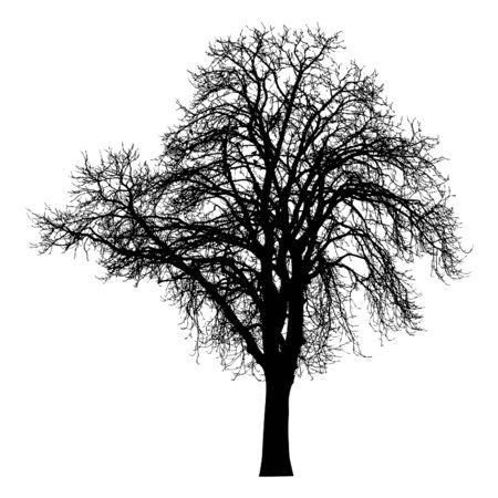 Silhouette of tree with branches. Winter scenery tree.