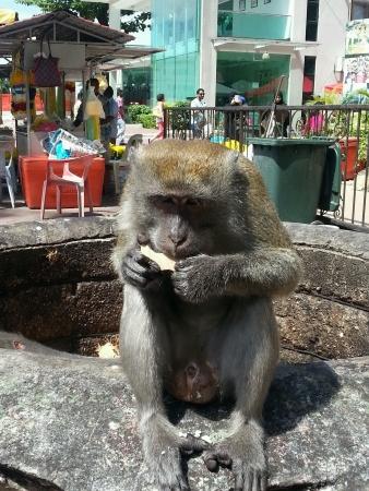 comiendo platano: mono de comer pl�tano Foto de archivo