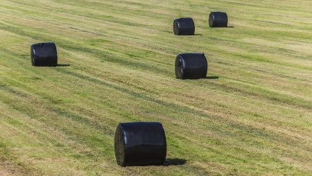 Hay bales wrapped in black plastic in the field photo