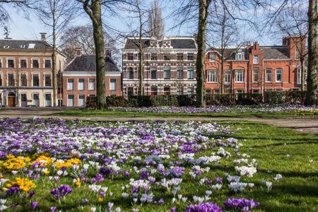 groningen: Kleurrijke krokussen op de Ossenmarkt in Groningen, Nederland