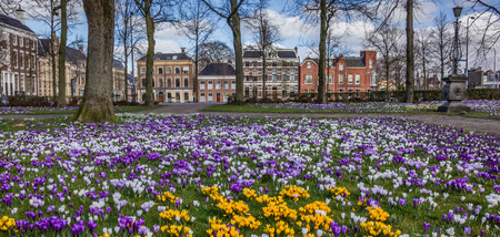 Panorama of colorful crocuses at the Ossenmarkt in Groningen, Netherlands Imagens - 37606040