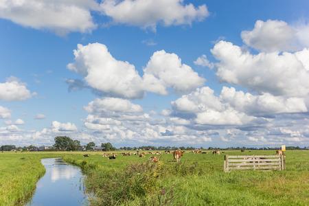 Weinig rivier door een Nederlands landschap met koeien, Nederland