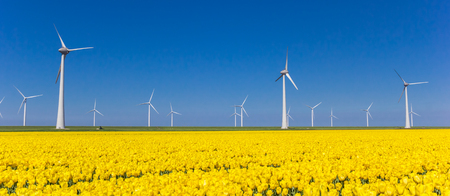 Panorama of yellow tulips and turbines in Noordoostpolder, Holland Stockfoto - 115447693