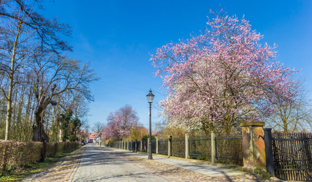 Old cobblestoned road with spring blossom in Rheda, Germany