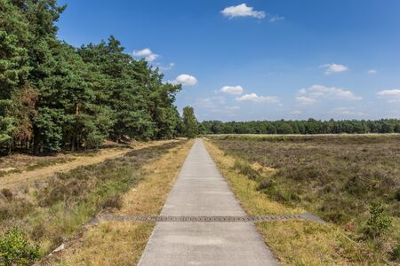 Bicycle path in national park Dwingelderveld, Netherlands