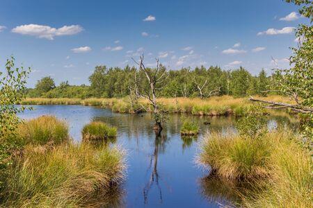 Feuchtgebiete des Nationalparks Dwingelderveld in Drenthe, Niederlande