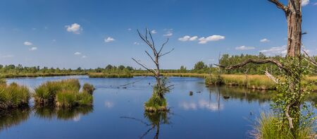 Panorama of dead trees in the moors of Dwingelderveld, Netherlands Stockfoto