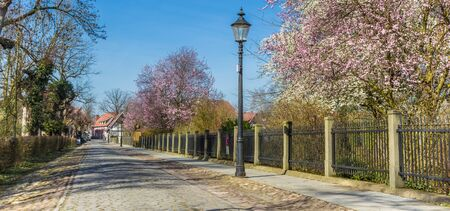 Panorama of an old cobblestoned road with spring blossom in Rheda, Germany Imagens