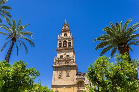 Palm trees and belfry of the mosque cathedral in Cordoba, Spain Imagens