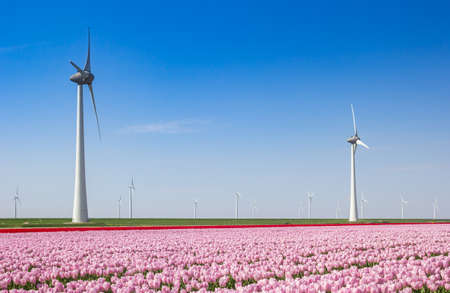 Pink tulips and wind turbines in springtime in The Netherlands Stock Photo