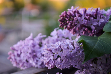 Beautiful bouquet of purple lilac on a blurred background. Spring. Beautiful spring pictures of flowers Foto de archivo