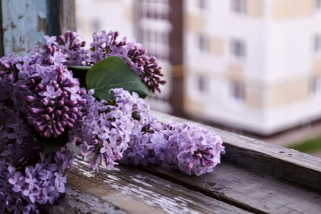 Blooming lilac flowers. Abstract background. Macro photo. Beautiful bunch of purple lilac
