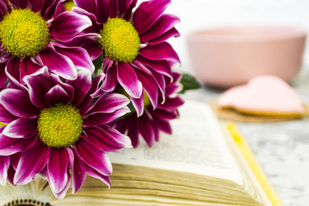 Pink Chrysanthemum. Maroon flowers with a yellow center lie on the open book of love. Blurred background. There is a place for text.