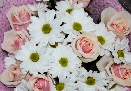 Closeup of a bouquet of pink roses and white daisy flowers for a holiday background. Congratulations bouquet of flowers.