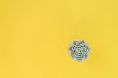 Small fresh green succulent on a yellow background. top view of the tank. Workplace decor. Ethno interior. There is a place for text. Stock Photo