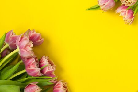 Pink tulips on a yellow background. March 8th, Happy Women's Day. The concept of spring. There is a place for text. Copy space