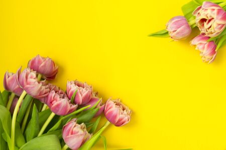 Pink tulips on a yellow background. March 8th, Happy Womens Day. The concept of spring. There is a place for text. Copy space