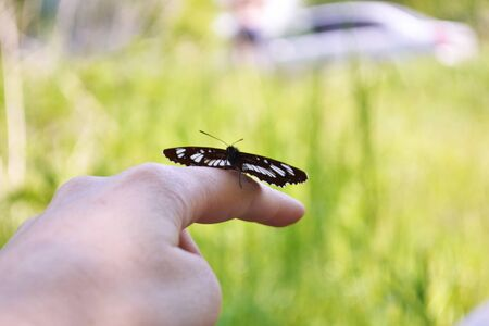 A black butterfly sits on a female hand. Close-up. Blurred background. Summer nature concept.