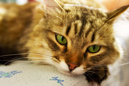 A red fluffy cat with green eyes lies on a white sheet with ornaments in a blue flower. The background is blurred.