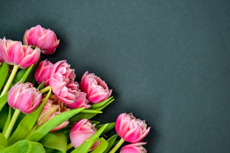 Pink tulip bouquet flower with green leaves isolated on black background chalk board. Copy space. Spring holiday concept. Banco de Imagens