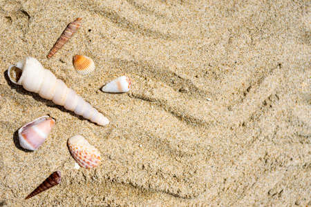 Seashells on the sand close-up. Tropical beach. Summer background. Copy space. Banco de Imagens