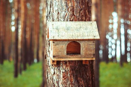 bird s house: Birdhouse in the woods Stock Photo