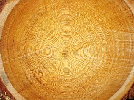 timber harvesting: Photo of big logs plan during timber harvesting. Stock Photo