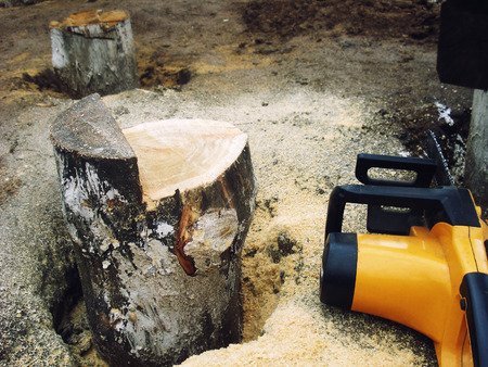 cut off saw: sawn off saw a log sticking out of the ground in the sawdust