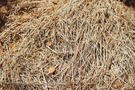 bundled: Bale of hay isolated on a white background as an agriculture farm and farming symbol of harvest time with dried grass straw as a bundled tied haystack.