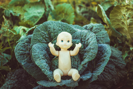 eradication: In the cabbage is a doll a child