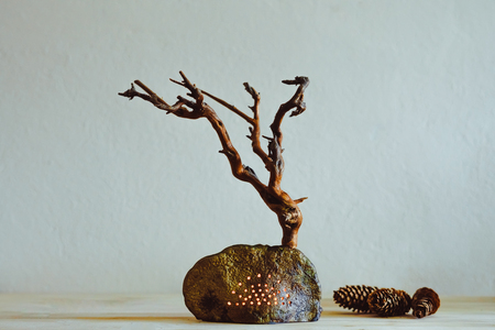 Dried Tree With Roots on the table as decoration Stock Photo