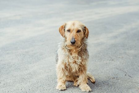 shaggy dog sitting on the pavement sad Reklamní fotografie